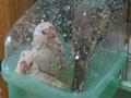 ぎゅう水浴び