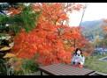 胸に染みる旭山公園の紅葉♪ BGM by Haruka(カバー あいたい).wmv