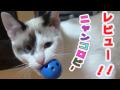 ニャンコロビーレビュー/ニャンコロビ―が大好きな猫